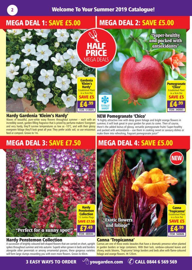 BLACKBERRY /'Black Cascade/' 2l fruit bush trailing hanging FREE DEL/> £25